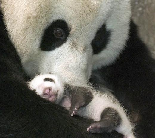 Bebe-Panda-Abraco