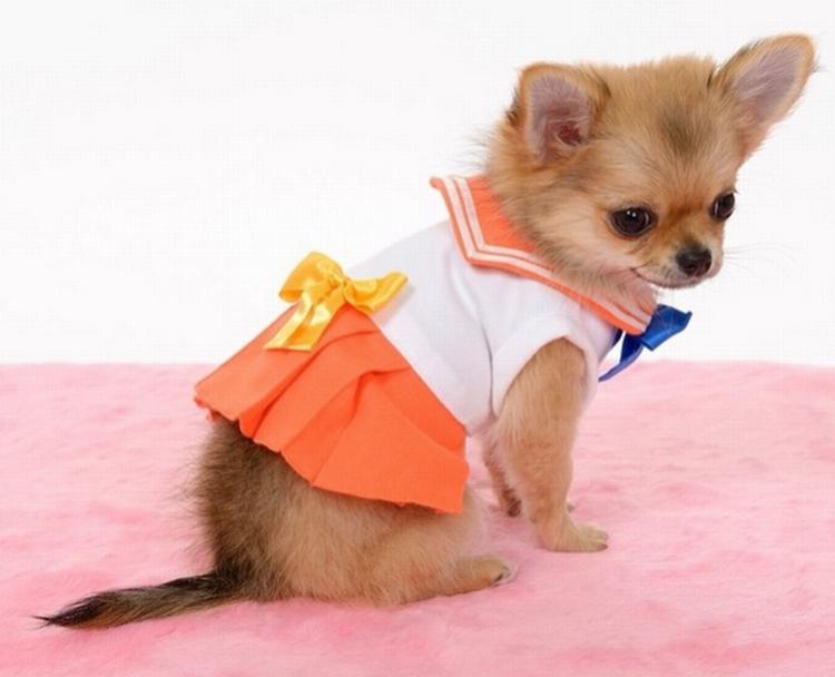 Cachorro Cosplay 04