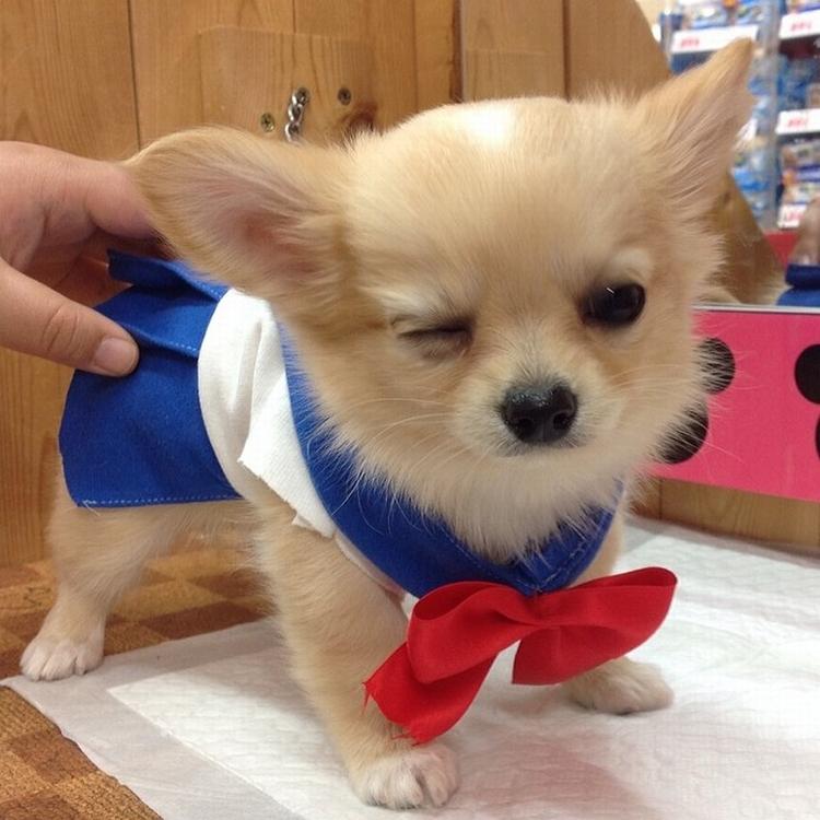 Cachorro Cosplay h